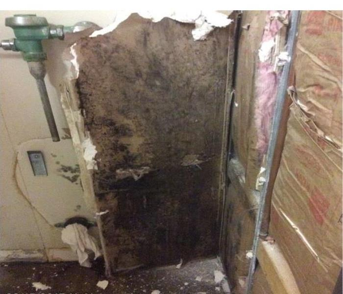 Commercial Mold Remediation Before