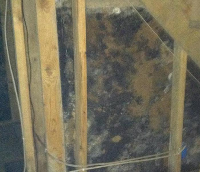 Mold Remediation Does Your Fostoria Home Or Business Have A Mold Problem?